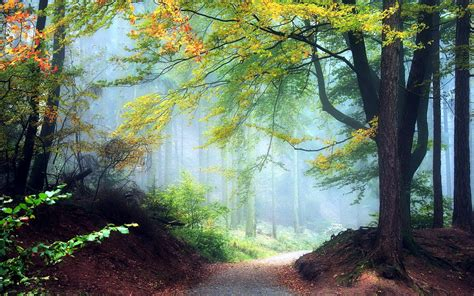 autumn forest  fog    forest photography