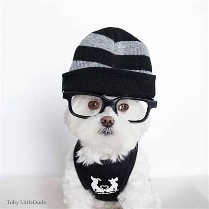 Hipster Adorable Toby Dog Maltese Heart Melt