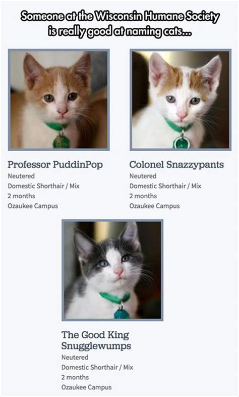 kitten names 17 best ideas about cat names on pinterest kitten names uncommon baby boy names and boy