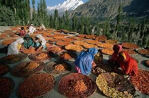 dried apricots peaches pears hunza the truth myths and lies about the health and