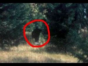 INCREDIBLE BIGFOOT SIGHTING CAUGHT ON TAPE (Video ...