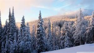 Snowy Forest wallpaper - 910637