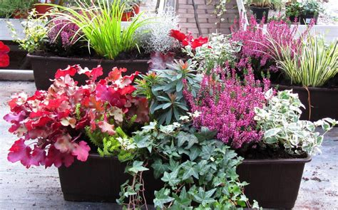 Winter Balkonpflanzen by Bepflanzter Balkonkasten 60 Cm Wintergr 252 N Balkonien