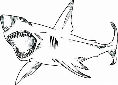 Shark Coloring Pages Jaws Thresher Sharks Colouring