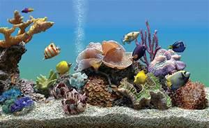 Un aquarium virtuel comme écran de veille