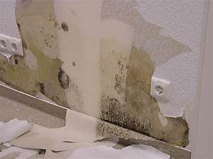 Schimmel Auf Tapete Entfernen : schimmel tapete entfernen schimmel entfernen schimmelsanierung selber machen o beauftragen ~ One.caynefoto.club Haus und Dekorationen