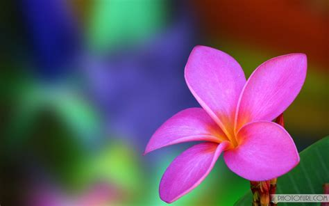 Download and share awesome cool background hd mobile phone wallpapers. Beautiful Colorful Flowers Wallpapers - Wallpaper Cave