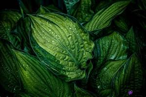 Bedeutung Farbe Grün : die wirkung von farben in der wohnung movu ~ Orissabook.com Haus und Dekorationen