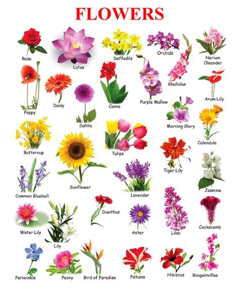 flower names flowers in picture for kids поиск в google happyenglish pinterest flowers english and