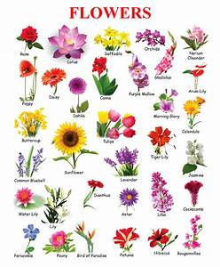 Information About Spring Flower Names And Pictures Yousensefo