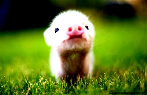 Baby Farm Animals Wallpaper - baby farm animals wallpapers background