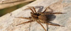 Faire Fuir Les Araignées : r guler la pr sence d 39 araign es sans pesticide consommer durable ~ Melissatoandfro.com Idées de Décoration