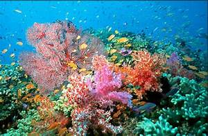 Coral Reef Under The Sea Oceans Of The World Ocean Sea