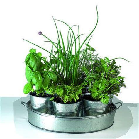 herbes aromatiques cuisine 17 meilleures idées à propos de jardin d 39 intérieur d