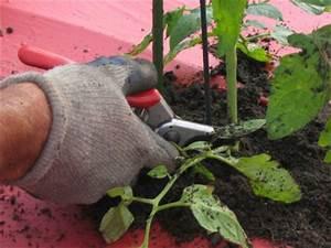 Quand Planter Les Tomates Cerises : comment faire pousser des tomates blog conseils astuces ~ Farleysfitness.com Idées de Décoration