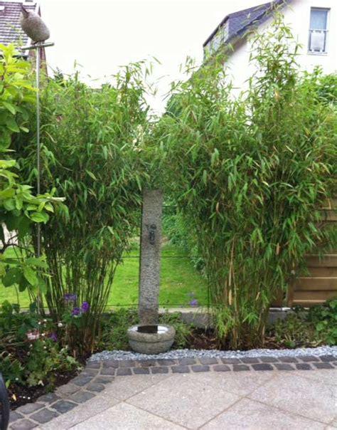 Garten Gestalten Bambus by Fargesia Murielae Standing Garten Bambus Bambus