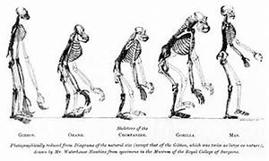 Human evolution - CreationWiki, the encyclopedia of ...