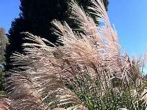 Winterharte Gräser Garten : winterharte gr ser im garten winterfeste ziergr ser gras ~ Michelbontemps.com Haus und Dekorationen