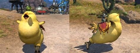 Find the best chocobo wallpaper on wallpapertag. Fat Chocobo dashing out of Weight Watchers and into Final Fantasy XIV | Engadget