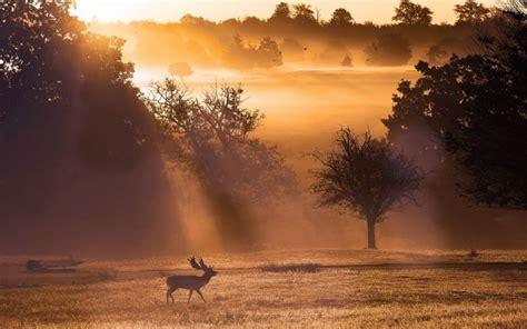 animals elk antlers nature landscapes fields trees fog