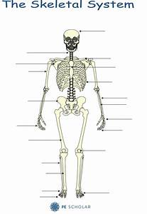 Skeletal System - Bones And Joints