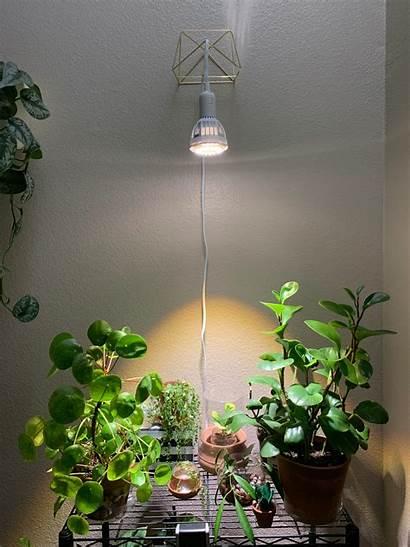 Grow Lights Indoor Led Lamp Sansi Plants