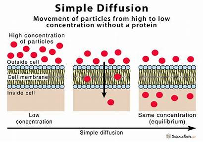 Diffusion Simple Diagram Definition Examples
