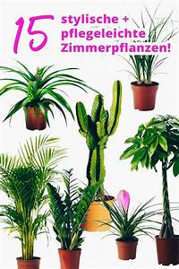 Pflanzen Für Wohnzimmer : die besten 25 pflegeleichte zimmerpflanzen ideen auf pinterest raumklima topfpflanzen und ~ Markanthonyermac.com Haus und Dekorationen
