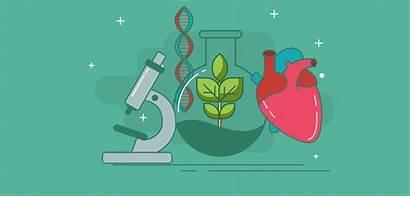 Biology Clipart Google Clip Cell Writing Molecular