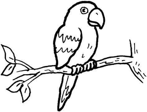 parrot clipart black and white parrot clipart black and white pencil and in color