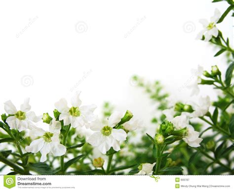 small white border flowers white flowers border royalty free stock photography image 693787