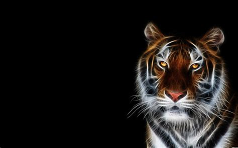 Animal Wallpapers - neon animal wallpapers 58 images