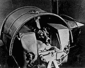 Dogs In Space Laika Went Up Into Space And Never Came