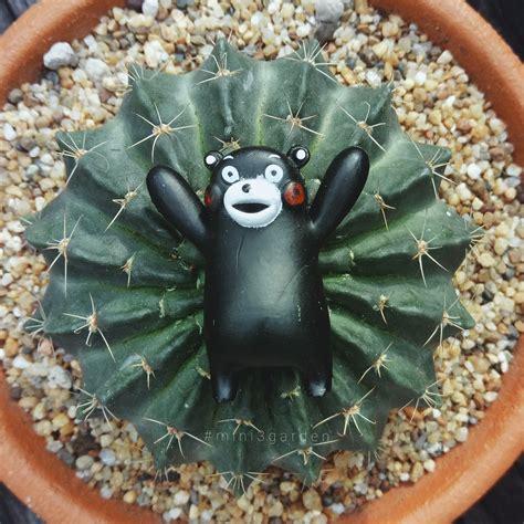 ปักพินในบอร์ด Cactus แคคตัส กระบองเพชร