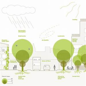 The Planners U0026 39  Guide To Trees In The Urban Landscape