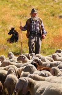 Sheep Shepherd Pasture