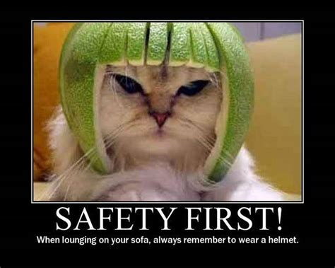safety cat cat safety meme picture