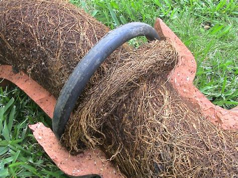 corrugated drain pipe how do tree roots get into my water lines how can this be