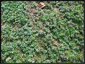 Desherbant Mauvaise Herbe : une mauvaise herbe ~ Premium-room.com Idées de Décoration