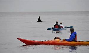 Outer Island Expeditions in Eastsound, WA | LivingSocial