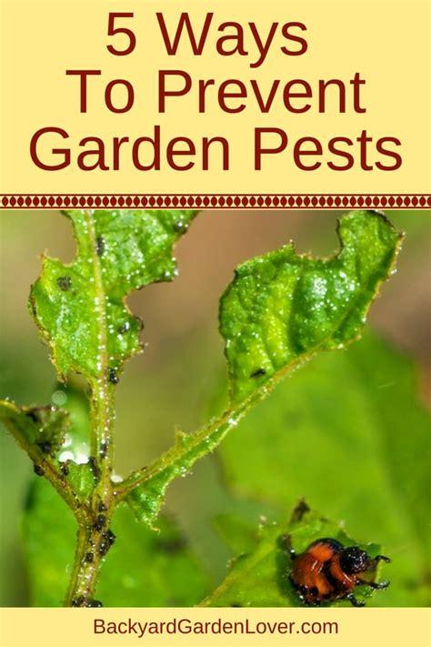 Vegetable Garden Pest Control Tricks Every Gardener Needs