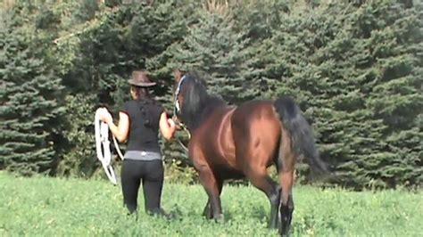 stallion behavior