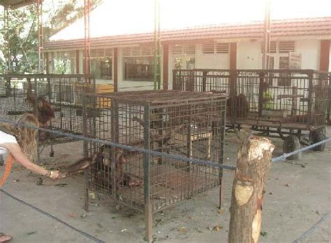 zoo death zoos indonesia closed surabaya animals should down living shut animal why die sold parts body needs abuse nightmare
