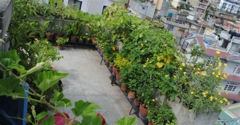 planning for vegetable gardening check these terrace