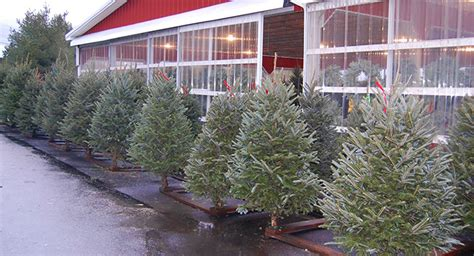 container christmass tree lancaster pa cherry hill orchards fruit farm farmers market lancaster pa