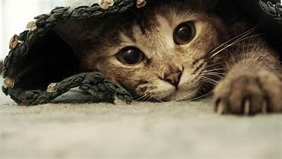 Cat Backgrounds Desktop Widescreen Pixelstalk