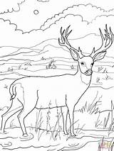 Hunting Coloring Printable Getdrawings Colorings sketch template