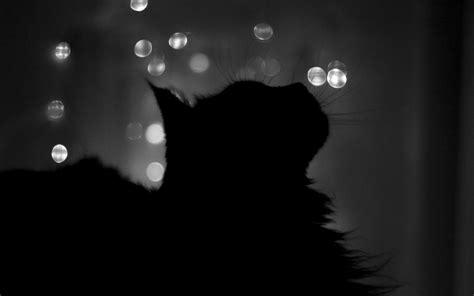 black cat  shade desktop wallpapers