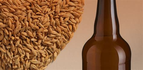 Bread was made not only from wheat, but also from barley, rice, millet, lentils, etc. What is Barley Wine?