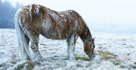 cold horses weather ice dangers horse ponybox tweet